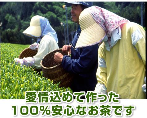 愛情込めて作った100%安心・安全なお茶です